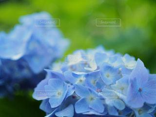 近くの花のアップの写真・画像素材[1237560]