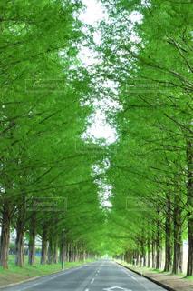 道の端に木の写真・画像素材[1238126]