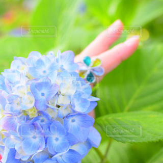 近くの花のアップの写真・画像素材[1238634]