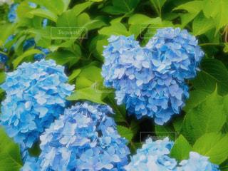 近くの花のアップの写真・画像素材[1240501]