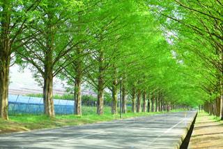 街の一角の木の写真・画像素材[1250556]