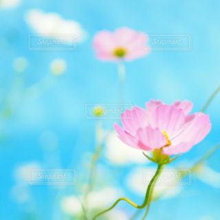 近くの花のアップの写真・画像素材[1318990]