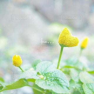 近くの花のアップの写真・画像素材[1415859]