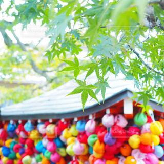 色とりどりの花のグループの写真・画像素材[1670874]