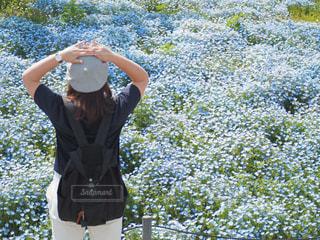 花,後ろ姿,ベレー帽,人物,ネモフィラ