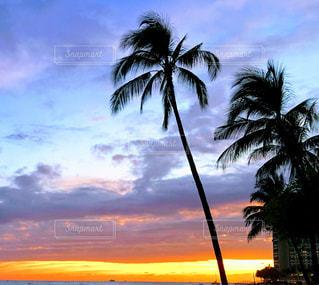 海,空,屋外,ビーチ,夕暮れ,海岸,樹木,草木,パーム