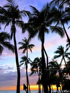 海,空,屋外,ビーチ,砂浜,夕暮れ,海岸,樹木,ハワイ,草木,パーム