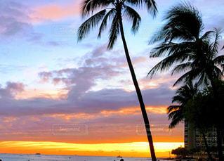海,空,夜,屋外,ビーチ,夕暮れ,海岸,樹木,ハワイ,草木,パーム