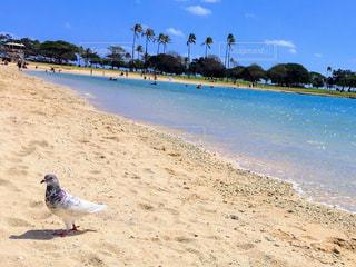 キラキラの海☆アラモアナビーチの写真・画像素材[1423407]