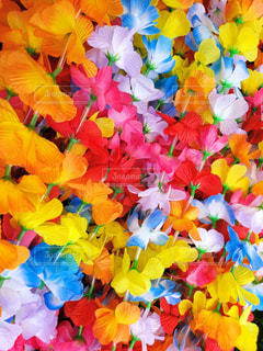 Happy Color‼︎の写真・画像素材[1547344]