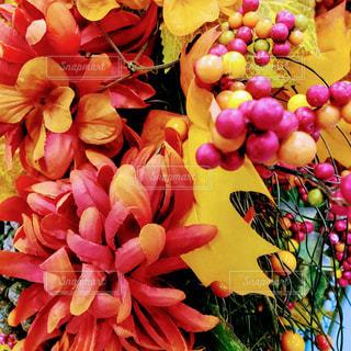 庭の秋色デコレーションの写真・画像素材[1584958]