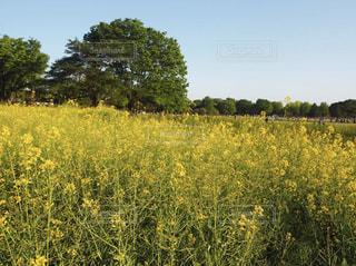 背景の木と背の高い草のフィールドの写真・画像素材[1865491]