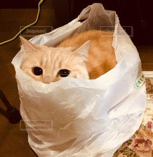 テーブルの上に座ってオレンジと白猫の写真・画像素材[1290861]