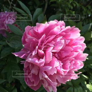 近くの花のアップの写真・画像素材[1397965]