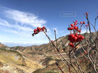 背景の山と木の写真・画像素材[1404875]