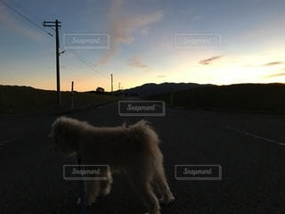 丘の上に犬の地位の写真・画像素材[1417445]