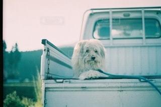 窓の前に座っている犬の写真・画像素材[2724756]