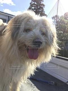 犬の写真・画像素材[2760302]