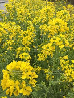 自然,風景,花,春,黄色,草木,休暇