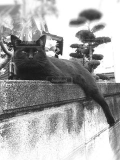 棚の上に座って黒い猫の写真・画像素材[1239003]
