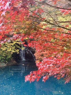紅葉,群馬,四万温泉,桃太郎の滝