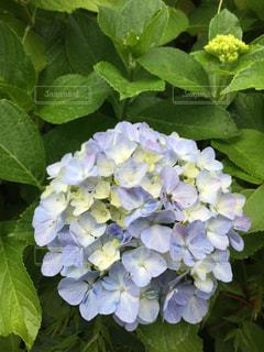 近くの花のアップの写真・画像素材[1246014]