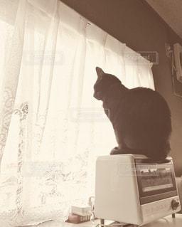 テレビの前に座っている猫の写真・画像素材[1240096]