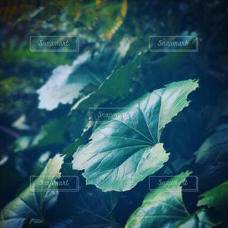 雨,植物,紫陽花,梅雨,オアシス