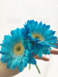 青い花の写真・画像素材[1365691]