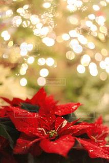 クリスマスの写真・画像素材[1369420]