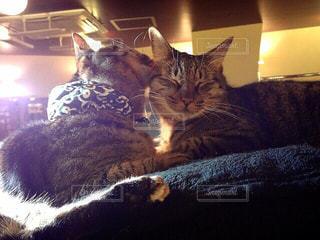ラブラブな猫の写真・画像素材[1259199]