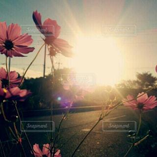 空,花,夕日,夕方,道端,草木