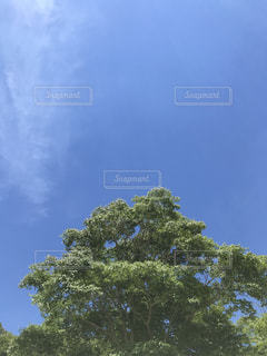 近くの木のアップの写真・画像素材[1320739]