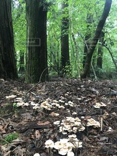 森の中の木の写真・画像素材[1394074]