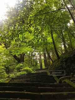 公園の木の写真・画像素材[1405641]