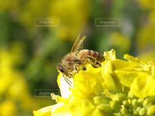 花,春,黄色,菜の花,季節,蜂,明るい,草木
