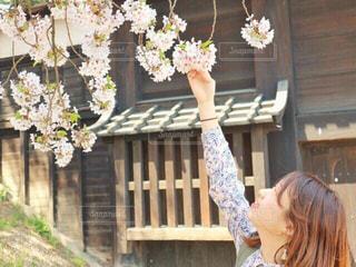 桜,ピンク,花見