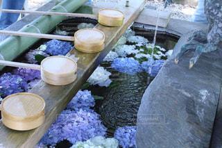 神社,水,紫陽花,梅雨,柄杓,一眼,インスタ映え,御裳神社