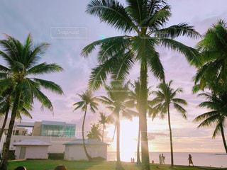海,空,夕日,ビーチ,ヤシの木,グアム,インスタ映え,夕日が綺麗