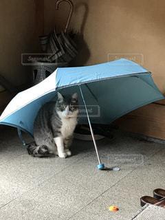 猫,雨,傘,雨宿り,濡れたくないニャー