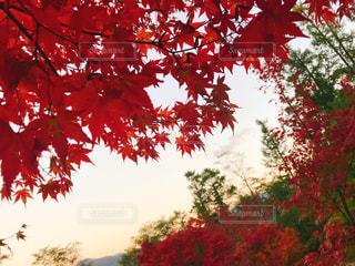 秋,紅葉,長野,モミジ,安曇野公園