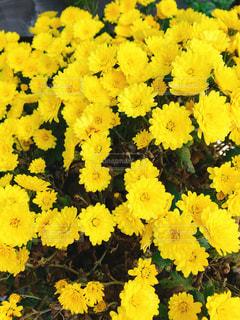 花,黄色,鮮やか,イエロー