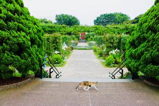 散歩中のネコの写真・画像素材[1262056]