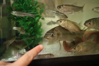 水で泳ぐ魚のグループの写真・画像素材[2948672]