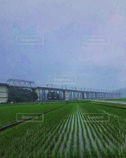 風景,空,緑,道路,草,道