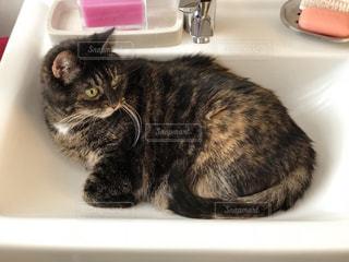 シンクの隣に座っている猫の写真・画像素材[1289612]