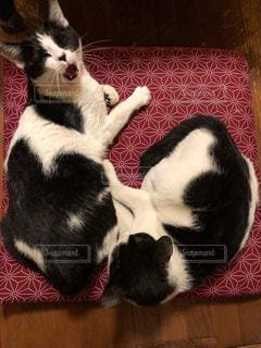 姉妹猫の写真・画像素材[1276932]