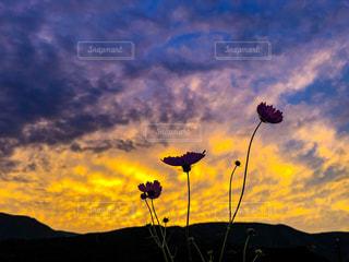 自然,空,花,秋,コスモス,雲,綺麗,景色,秋空
