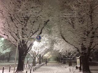 冬,雪,白,銀杏並木