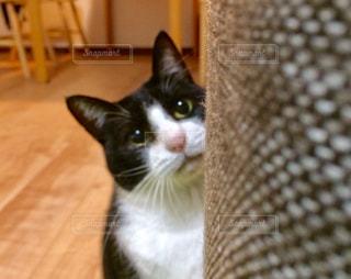 白い面の上に座って猫の写真・画像素材[1257726]